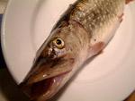 Hecht - Der Bodybuilder der Fische